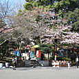 sakura no Ueno